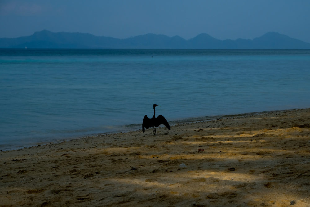 bird on the beach kokradan thailand