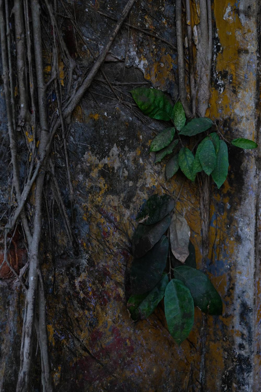 zielone liscie na scianie