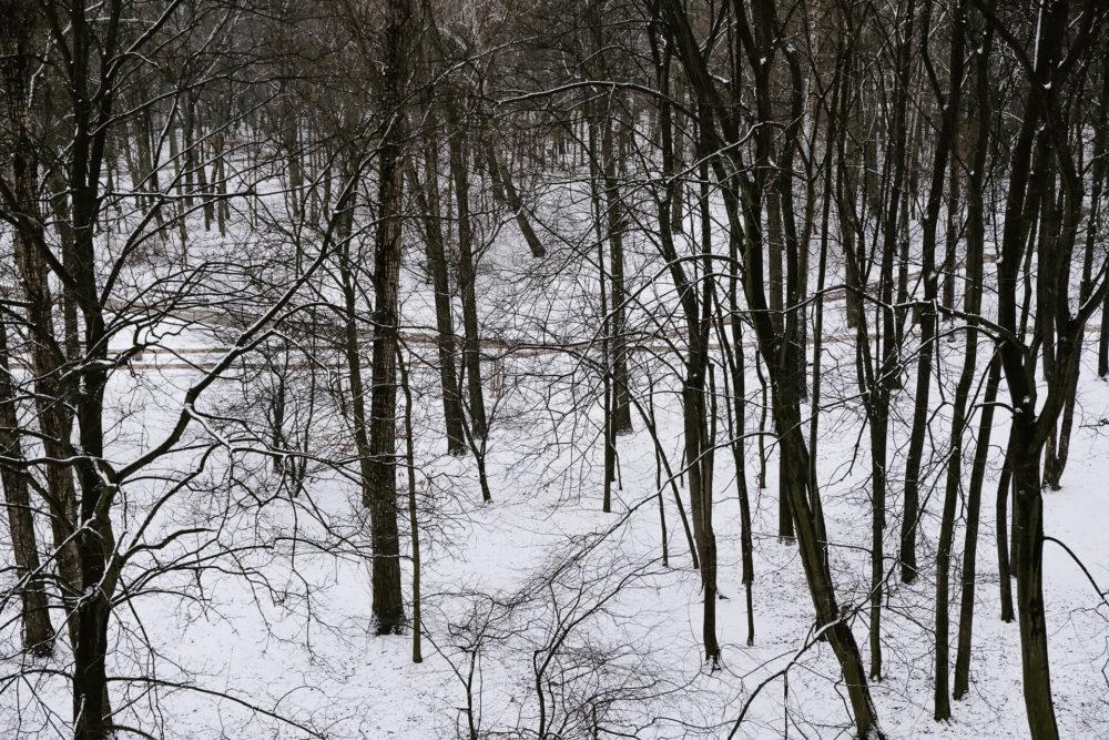 zima park