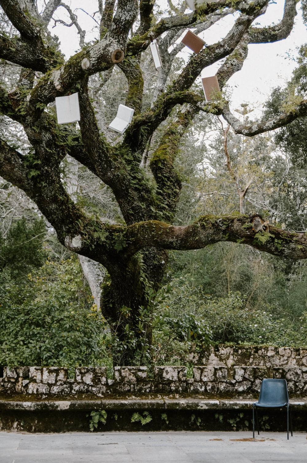 Drzewo z książkami, Sintra, Portugalia