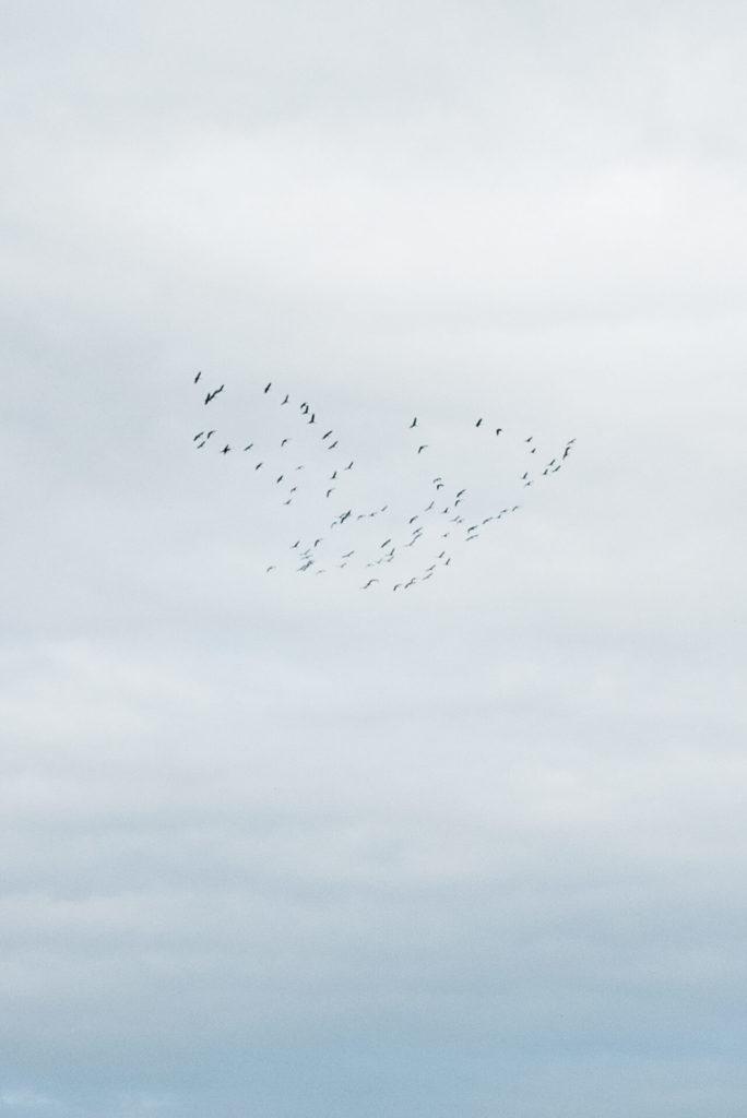 Ptaki lecą po niebie