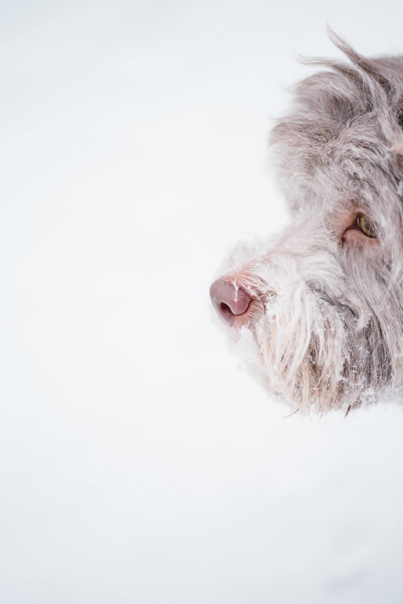 portret-psa