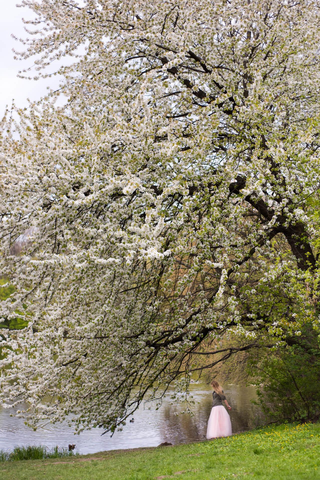 Kobieta w tiulowej spódnicy pod kwitnącym drzewem