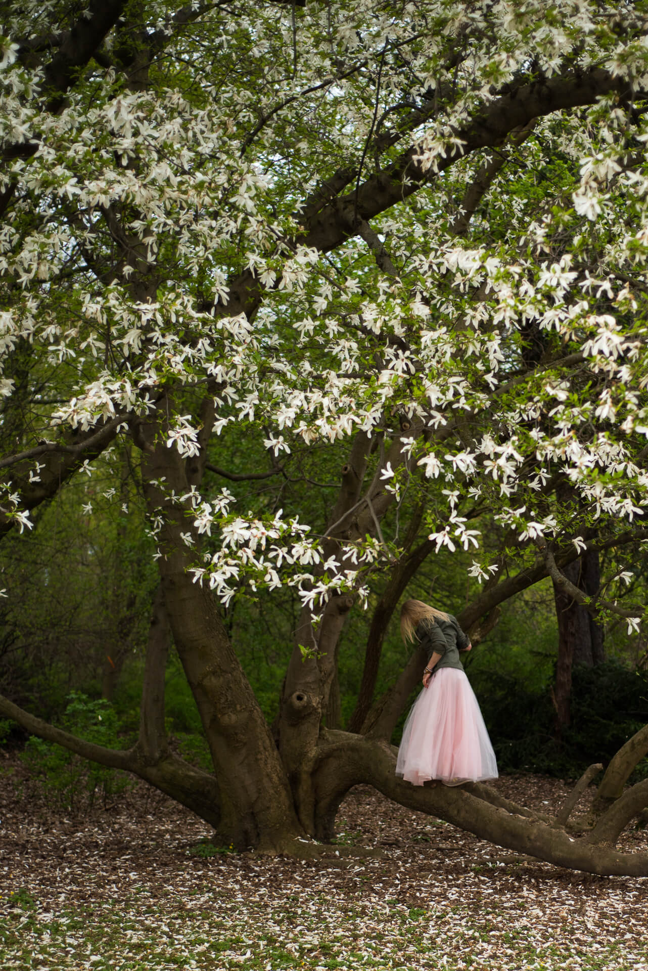 Kobieta w tiulowej spódnicy wchodzi na drzewo magnolii