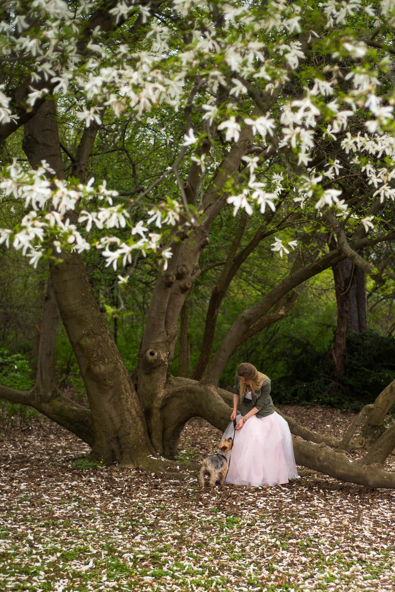 Kobieta w tiulowej spódnicy z pieskiem pod drzewem magnolii
