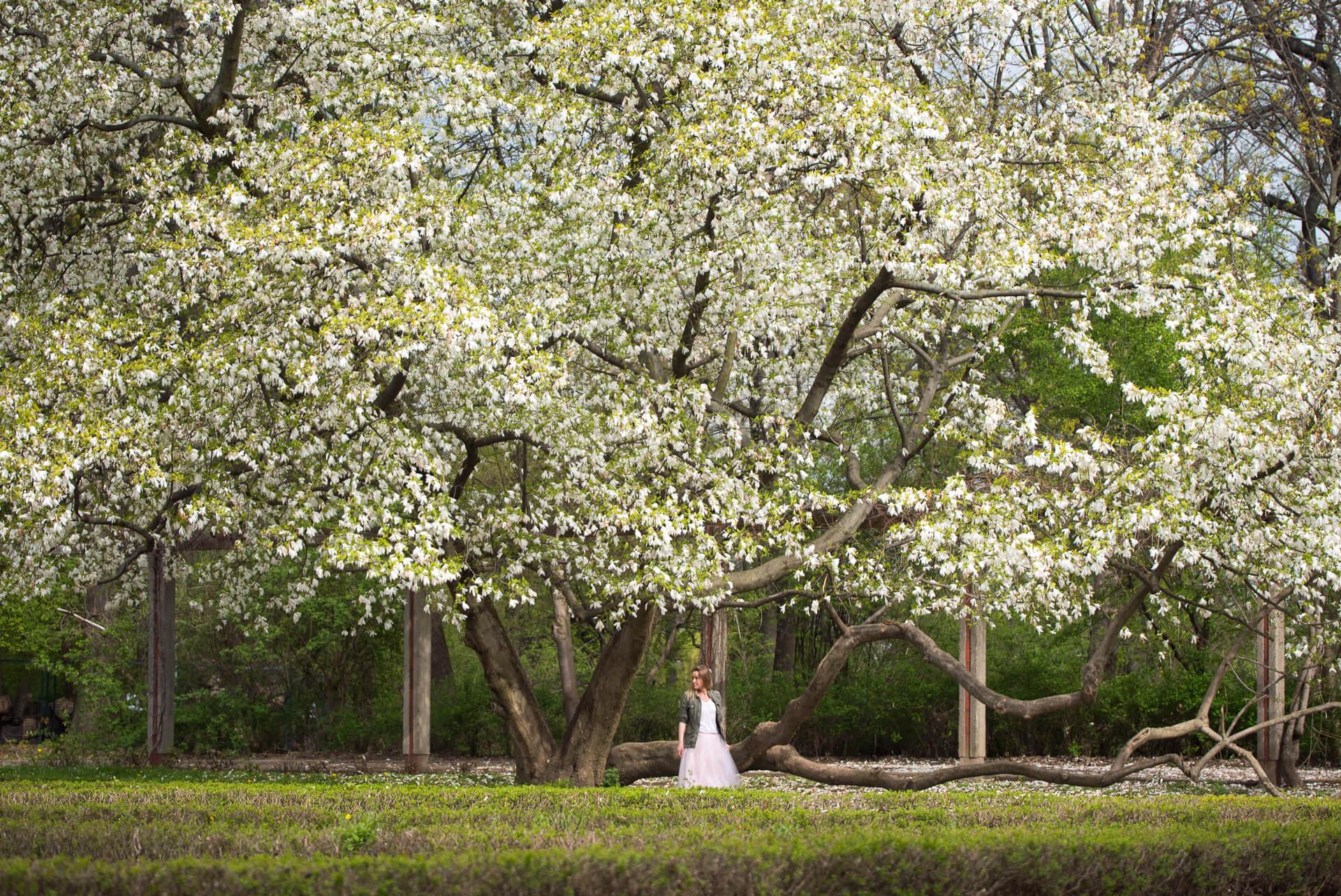 kwitnące drzewo magnolii i kobieta w tiulowej spódnicy